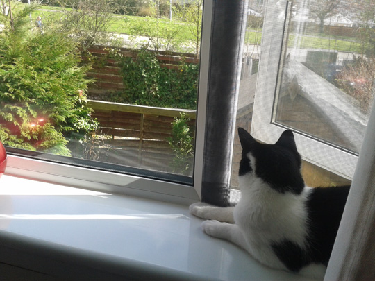 Amy in Glasgow enjoying Flat Cats