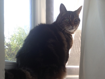 Speedy from Catford looking puzzled because he cant get out of the window