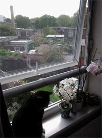 Flat Cats in London SW12