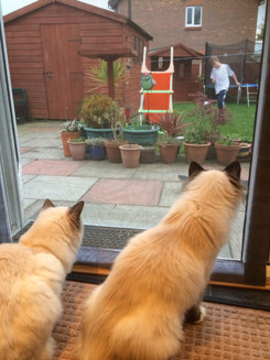 Marley & Sadie in Liverpool enjoying their view with Flat Cats