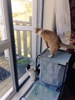 Cats in Caerphilly now safe with Flat Cats on the windows