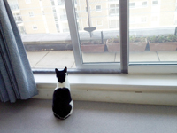 Flat Cats in use in London