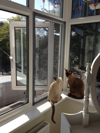 Flat Cats in use in Ramsgate