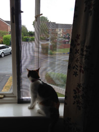 Flat Cats protection cats in Newton Abbot in Devon