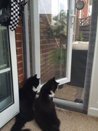 Flat Cats protection cats in Basingstoke
