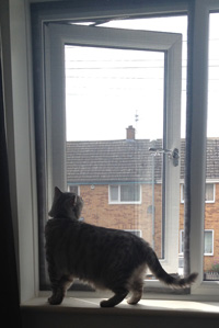 Flat Cats protection cats in Leicester