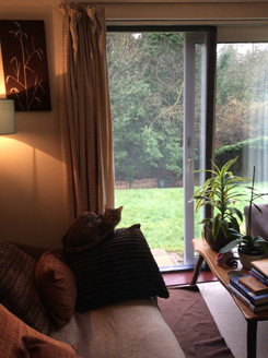 Flat Cats at work in Potterne Wiltshire